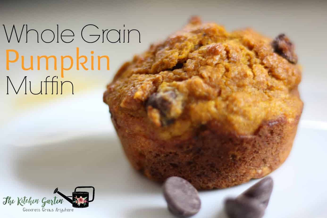 Whole Wheat Pumpkin Chocolate Chip Muffins The Kitchen