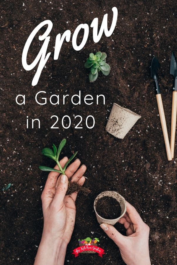hands in soil with green plant