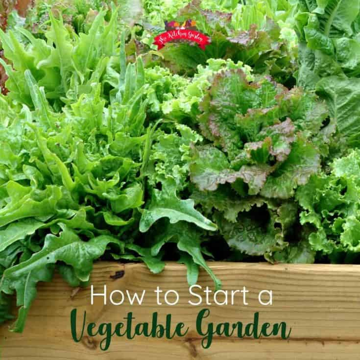 How to Start a Vegetable Garden: Planning