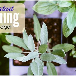 Gardening on a Budget: Beds and Dirt