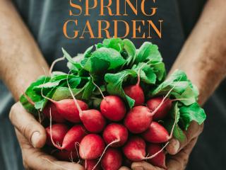 spring garden radishes