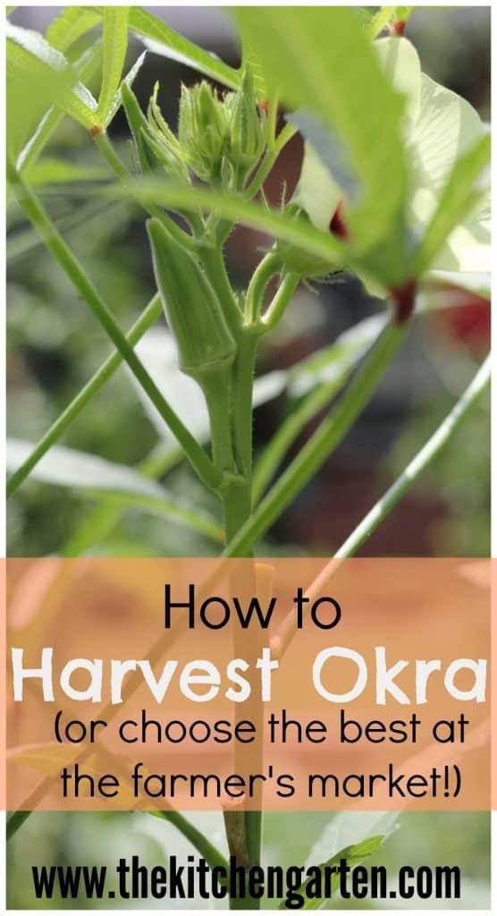 harvest okra pin