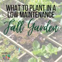 low maintenance fall garden