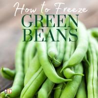 fresh green beans waiting to be frozen