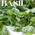 fresh basil ready to be dried on a white towel