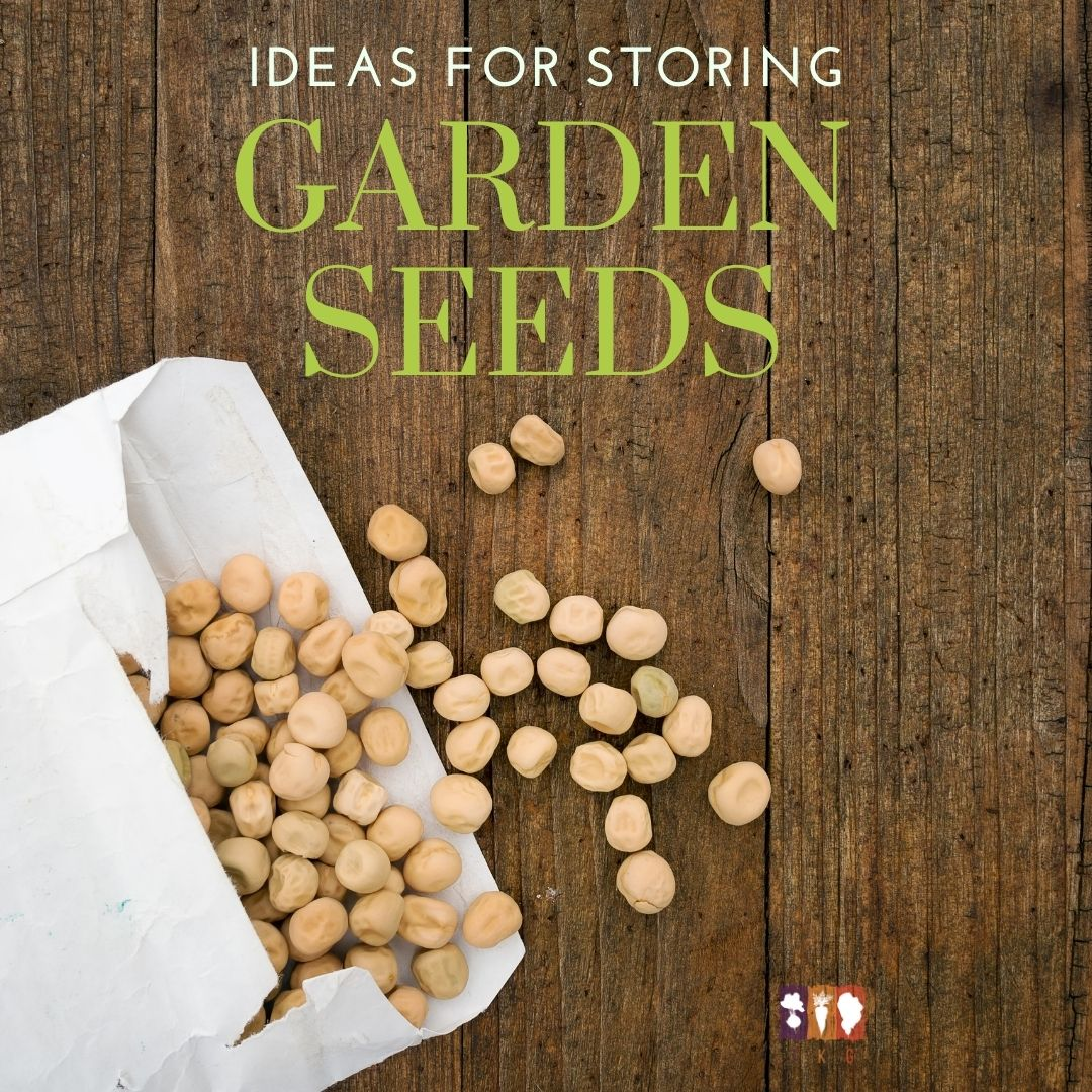 garden seeds in package on a wooden table
