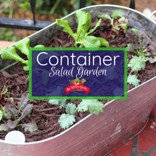 Container Salad Garden