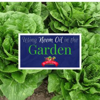 Uses for Neem Oil in the Garden