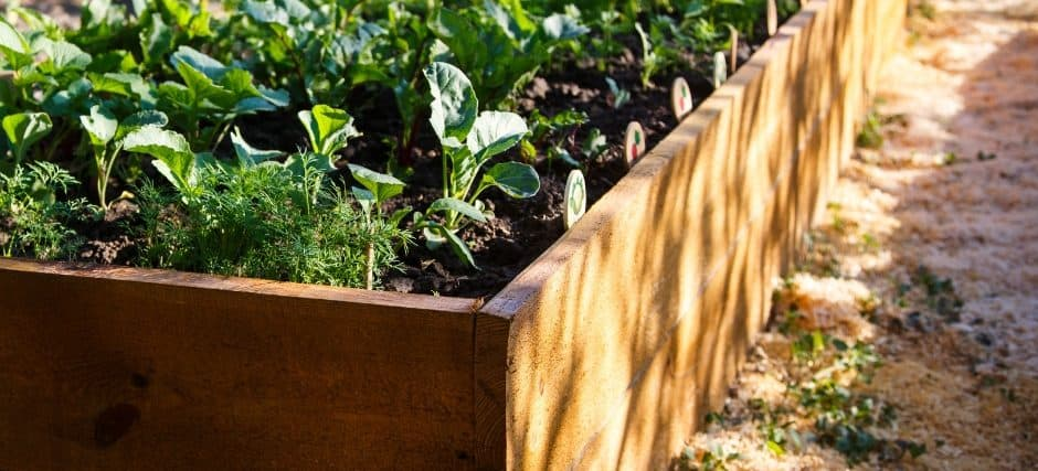 how to start a raised bed garden