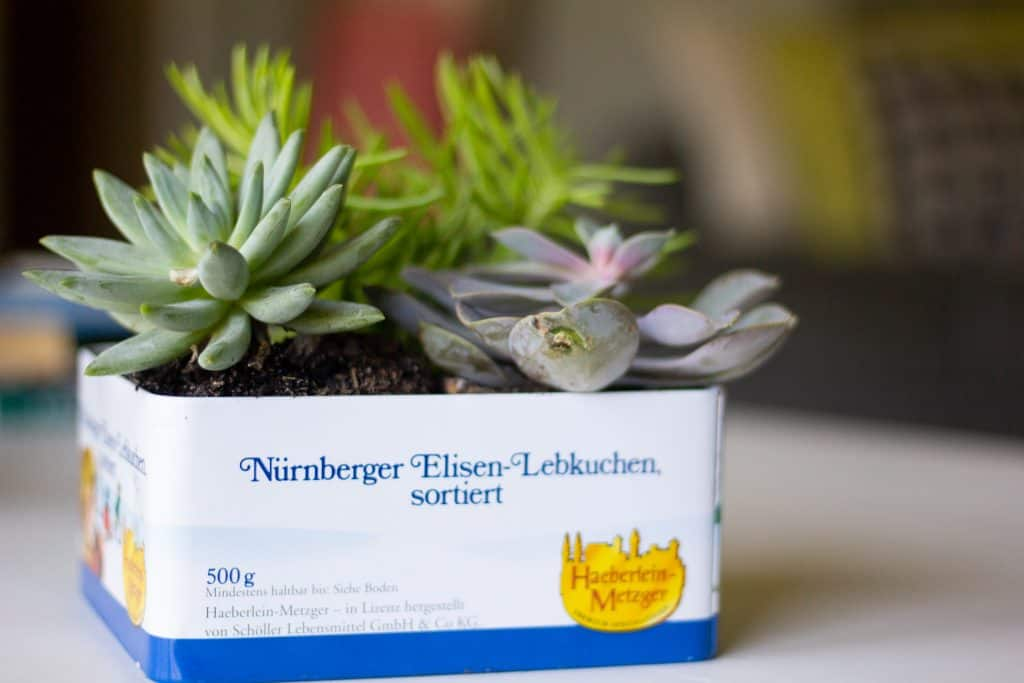 tin with succulents planted inside