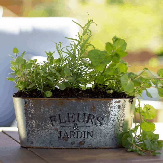 herb garden planter with thyme, rosemary, and mint