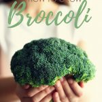 broccoli heads in hand