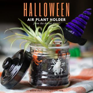DIY Halloween Air Plant Holder