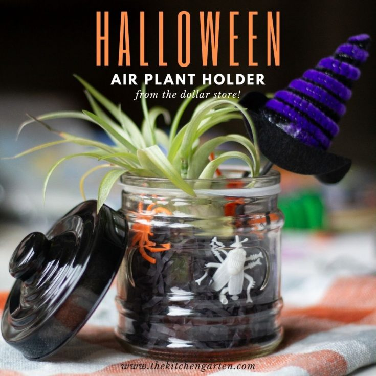 glass jar with black paper shred, plastic bugs, and a witches hat holds a small air plant