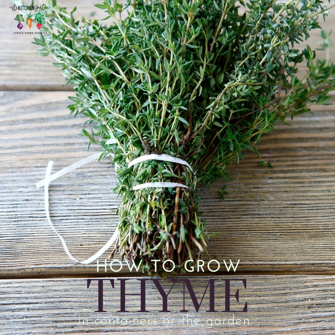 bundle of thyme on wooden table