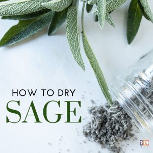 dried sage and fresh sage on a white table