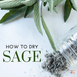 How to Dry Sage (Rubbed Sage)