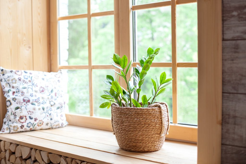 ZZ plant in natural fiber planter on windowsill