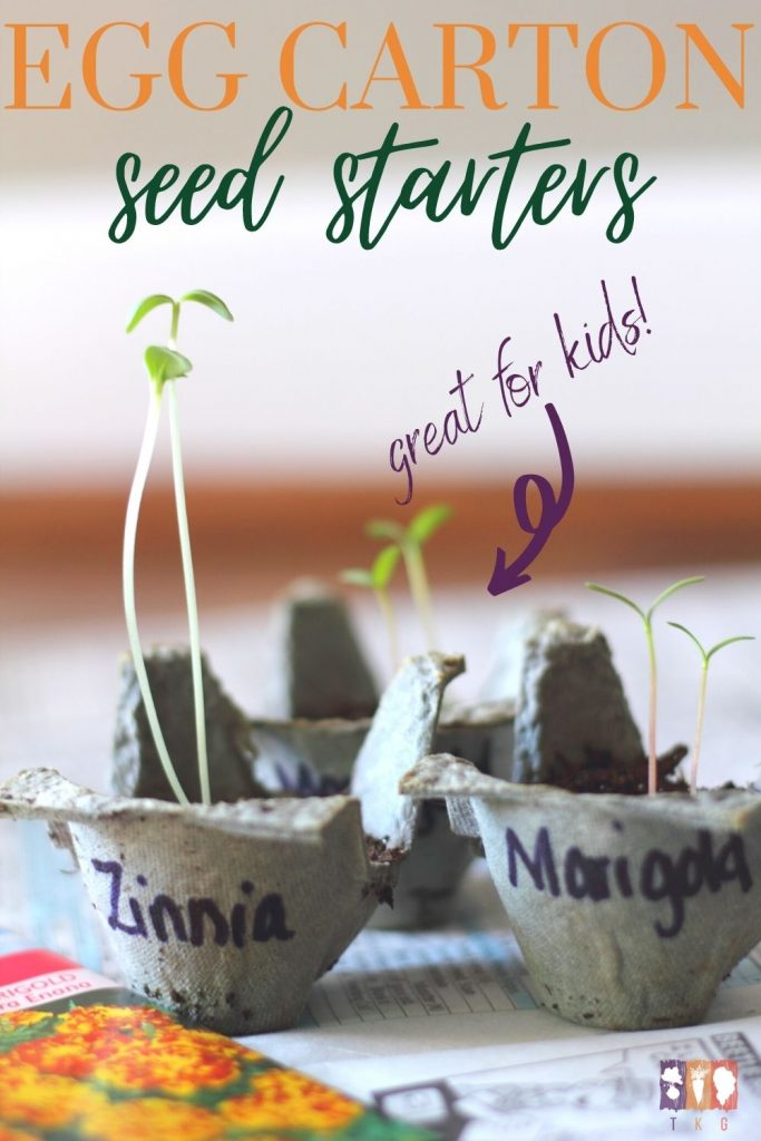 seedlings growing in soil in an egg carton