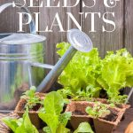 plants and seeds on a potting bench