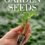 when to start garden seeds