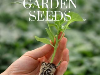 a new garden seedling ready for planting