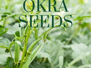 okra pods on a green stem