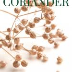 dried coriander on stems