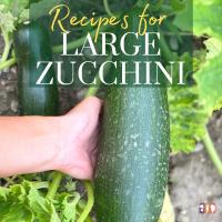 large zucchini