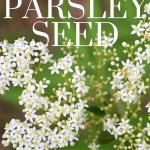 saving parsley seed