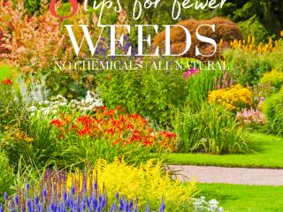 weed free flower bed